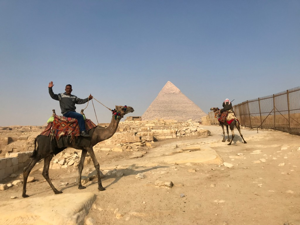 Camels and horses - Scams in Egypt